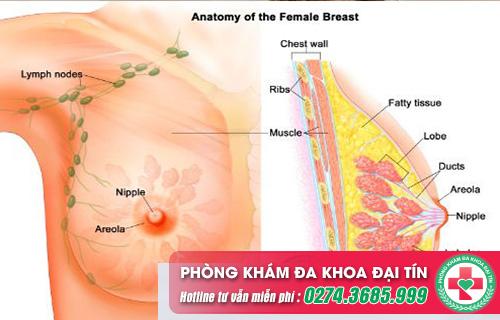 Viêm tuyến vú gây ra nhiều nguy cơ